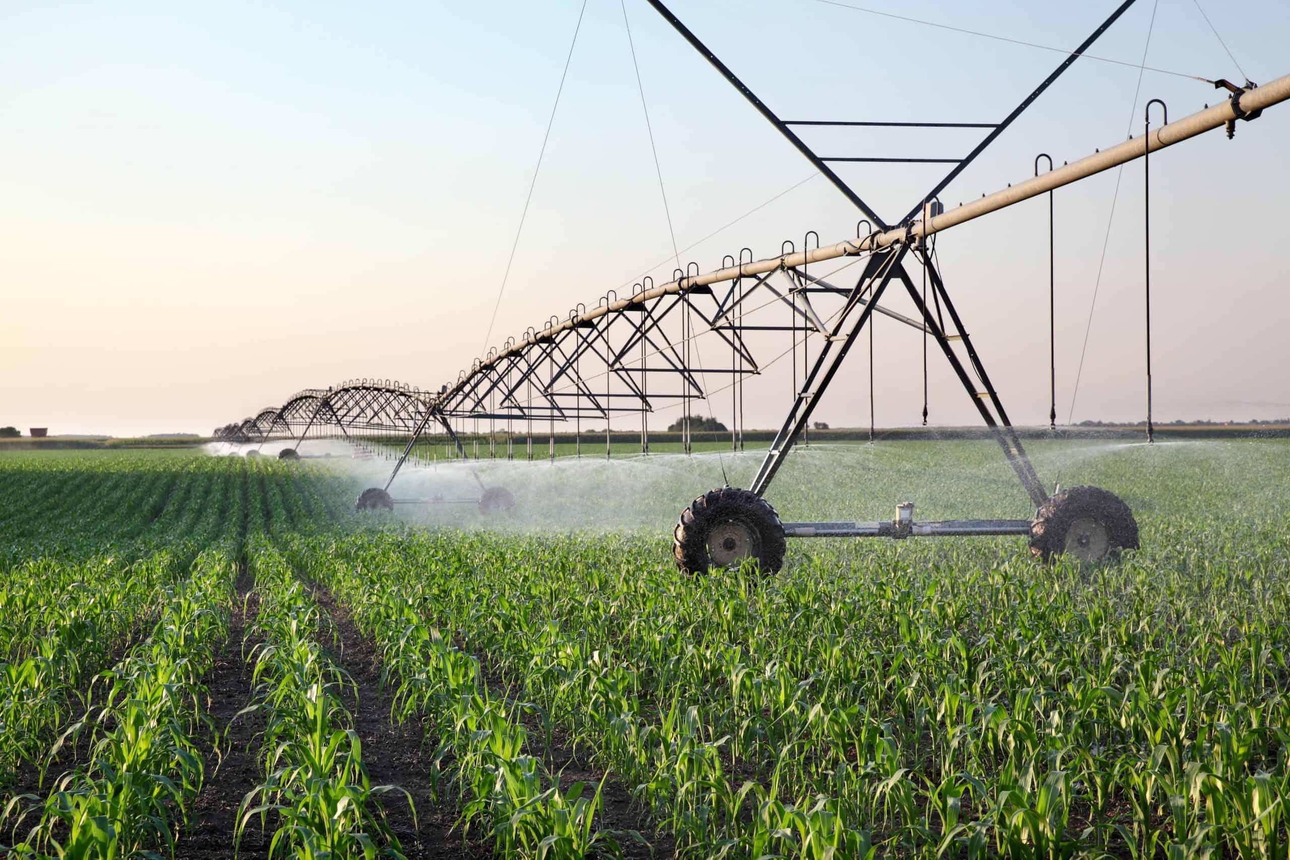 Corn field watering in spring